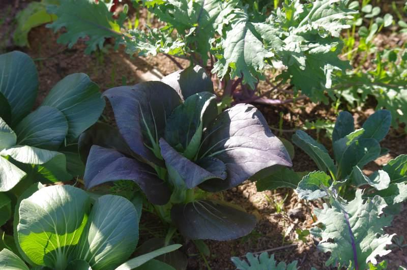 How to Grow California Native Plants With a Vegetable and