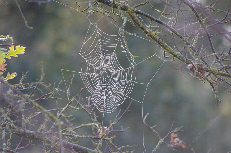 The morning frost and the winter light high lighted this otherwise invisible web. - grid24_24