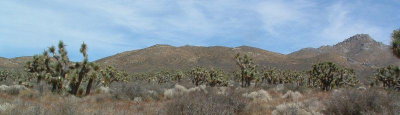 Joshua Tree Woodland  out in the desert - grid24_24