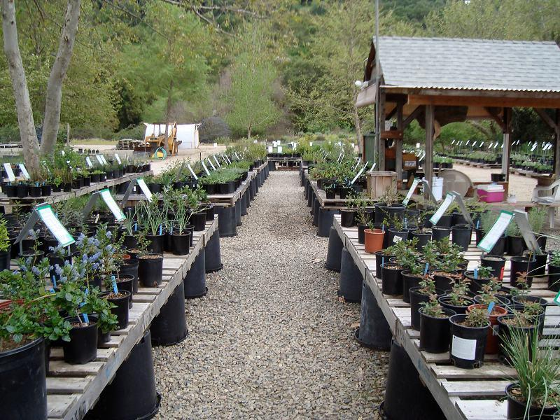 The Retail Section Of Our Native Plant Nursery It Is Set Up For You To
