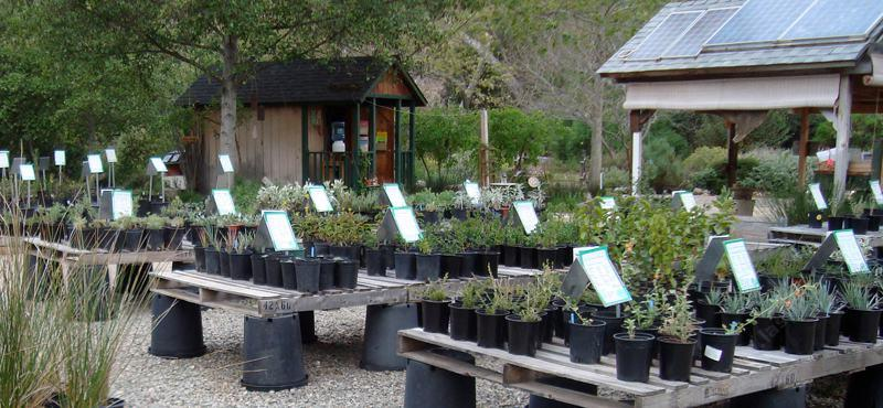 Native Plant Nursery For San Diego Los Angeles And The