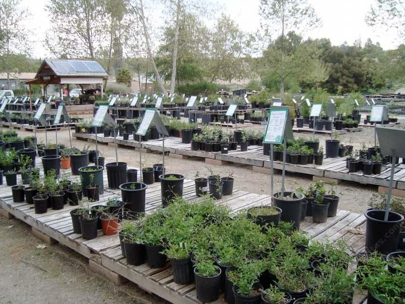 Native Plant Nursery For San Go Los