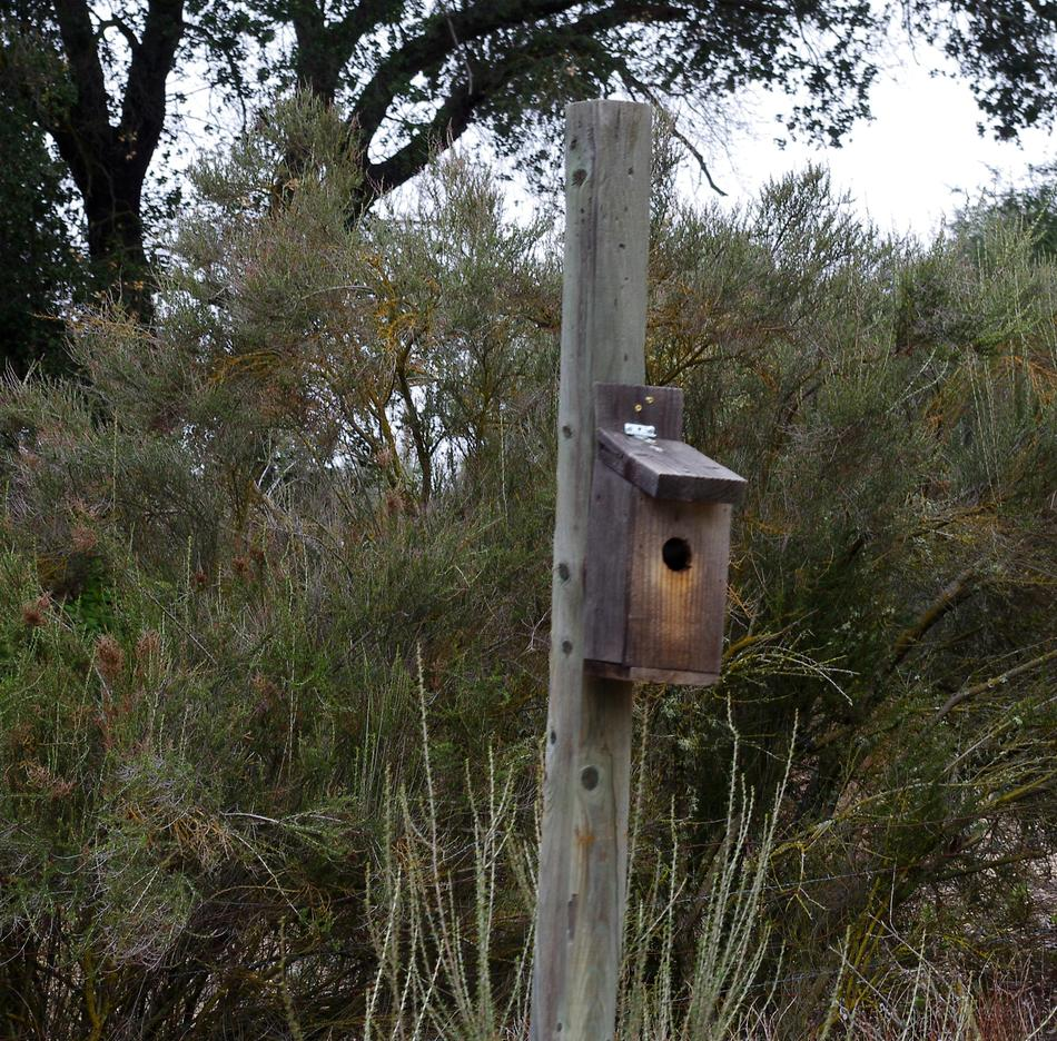 How to build a bird house for Building a quail house