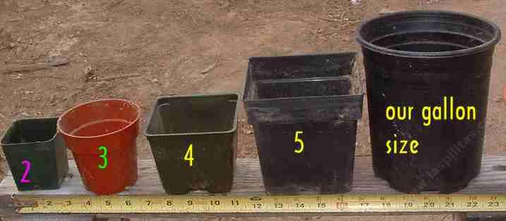 Nursery Container Sizes From 2 Inch Pot Liner 3 4 5