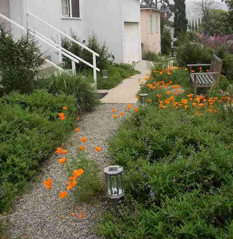 Native Home Garden Design: A Small California Native Plant Garden In Los Angeles