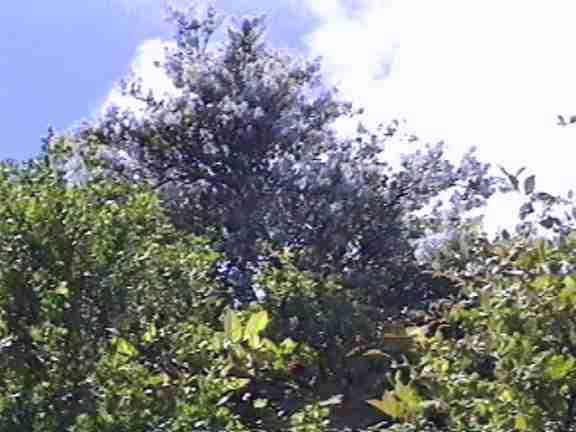 Woodland oaks community association