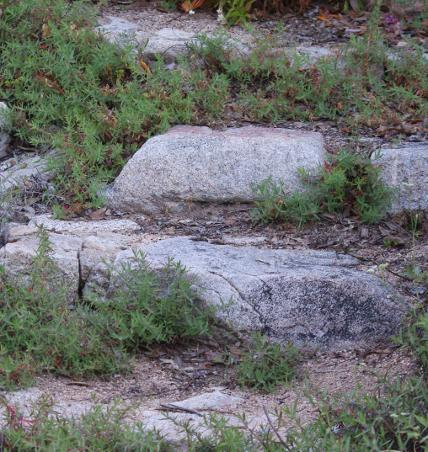 a garden step made of rock with California Fuchsia mixed in. - grid24_6 - How To Build A Simple, Cheap, Garden Retaining Wall.