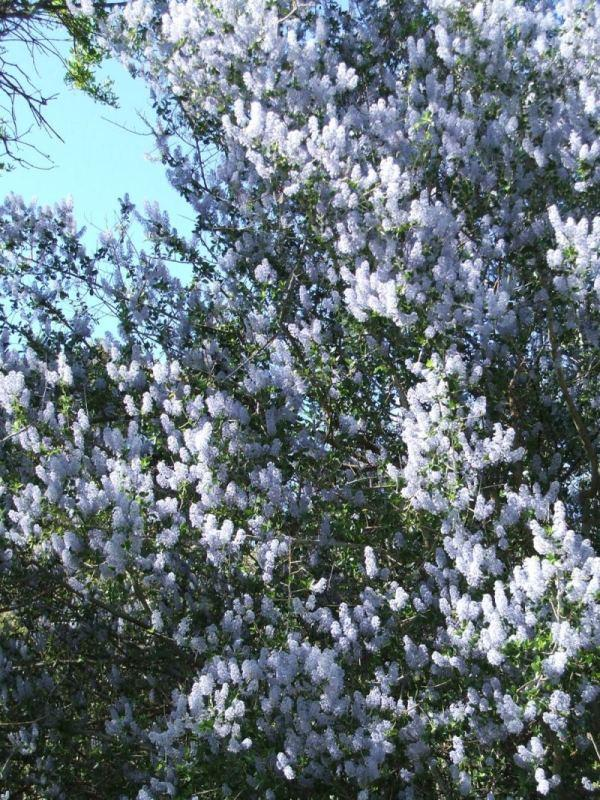 The Fragrant Garden A Word On The Fragrance Of