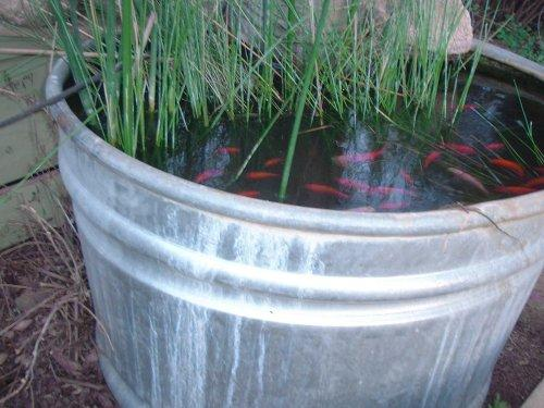 how to make a simple and cheap fish pond
