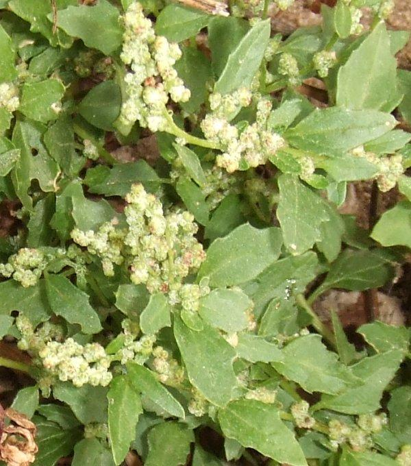 Easy Weed Control  Help With Control