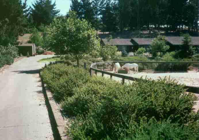 this 7 year old native plant garden was not watered arctostaphylos purrisima in front - Garden Examples Photos