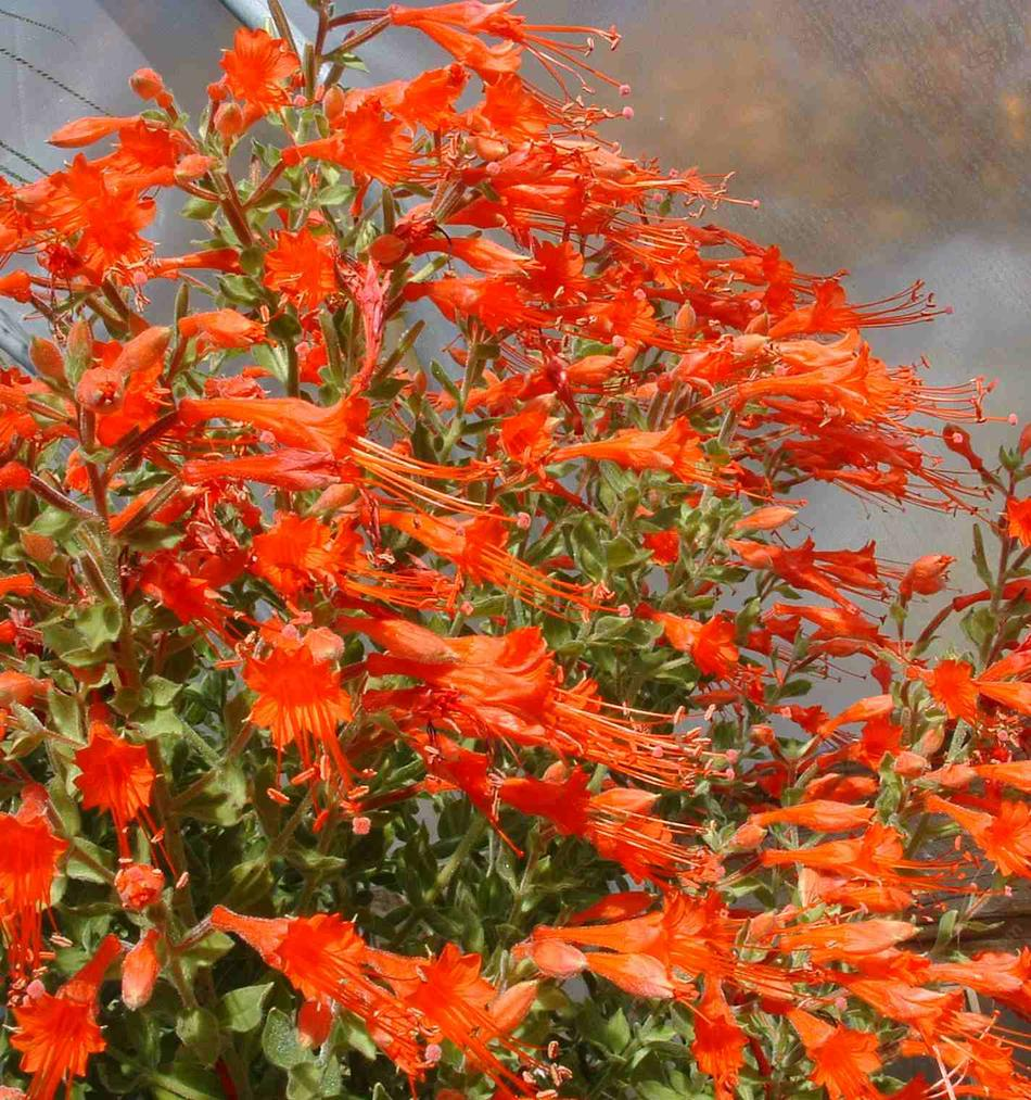 Drought tolerant plants for a long beach southern for Best flowers to grow in california