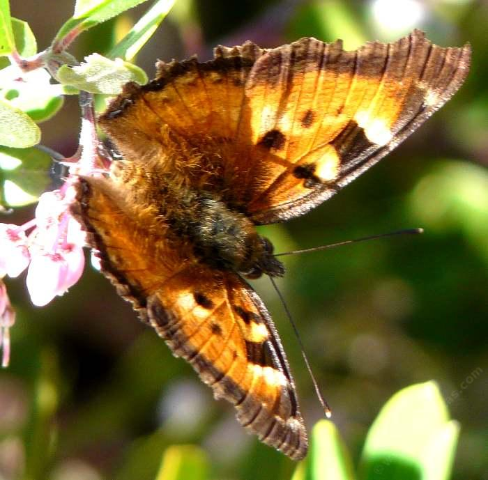 how to create a butterfly garden in southern california