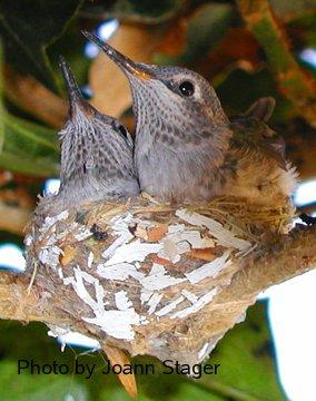 How do birds learn to build nests