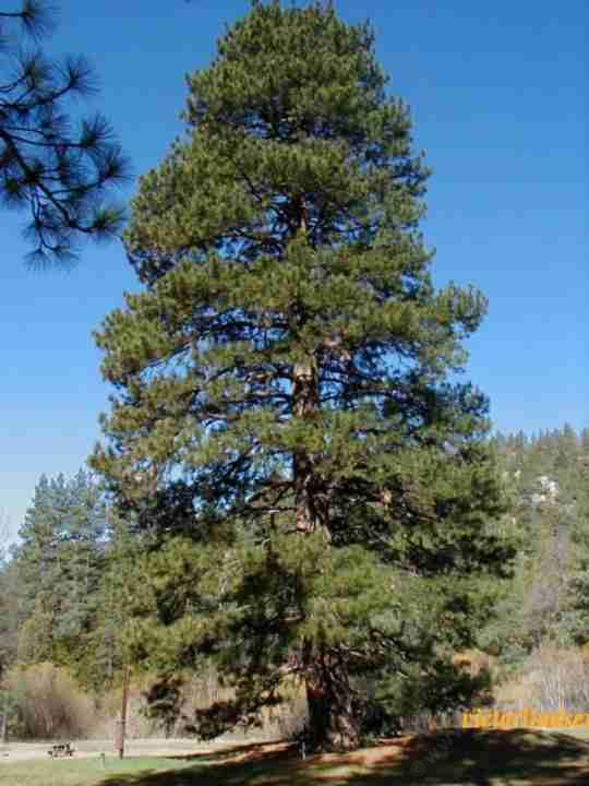 Here S A List Of California Native Plants Planted At About
