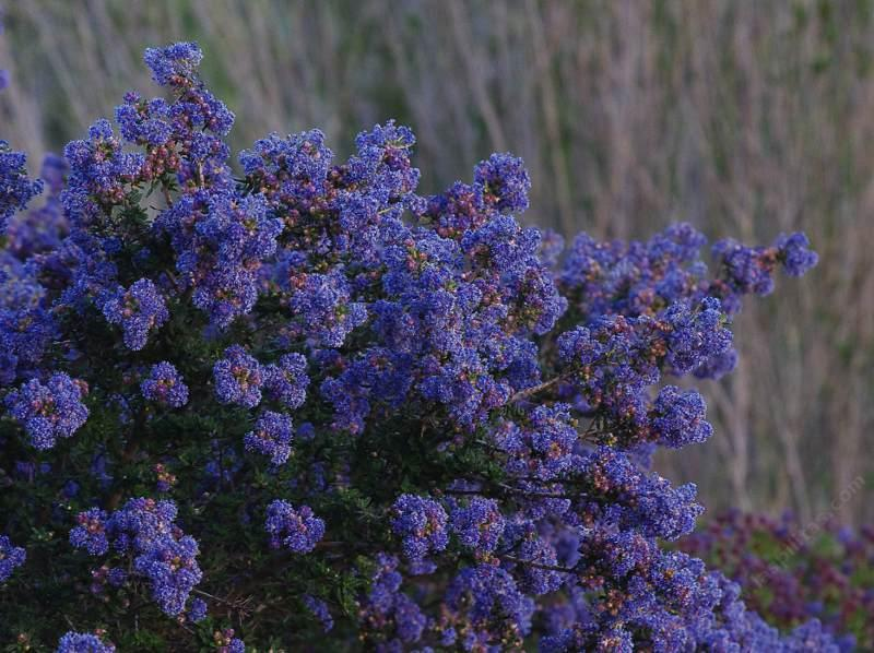 California Native Plant Articles And Classes
