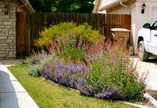 Front Yard Landscaping Design Shade Plants