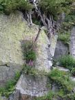 Fireweed growing in a rock face at 8000 ft. in the Sierras