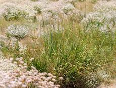 This was a planting down by our bridge. I thought the Giant Rye / Buckwheat mix was wonderful. - grid24_6