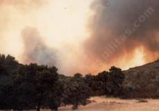 The fire that burned all the manzanitas(the gray spots) behind Las Pilitas nursery in 1979. - grid24_6