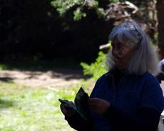 Celeste Wilson up in the Sierras in 2011. Looking at a pine id booklet. Celeste got us into native plants in the early 1970's. - grid24_6