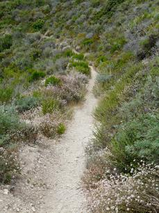 A trail through coastal sage scrub. Plants include Lupinus chamisonis, Coyote Bush, Cliff Buckwheat, Deerweed, Sticky Monkey flower, and Giant Rye. - grid24_6
