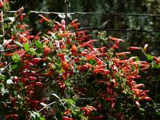 There are some pretty native plants growing in Southern California. - grid24_6