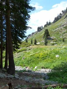A rather dry mountain meadow in the Southern Sierras - grid24_6