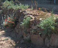 Dry stack rock wall with California  native plants - grid24_6
