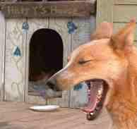 Harry the dog yawning as he's asking are we done yet. - grid24_6