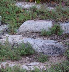 a garden step made of rock with California Fuchsia mixed in. - grid24_6
