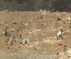 planting native plants next to rocks back in the early 1990's - grid24_6