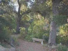 A garden bench under native Coast Live Oak  can create a natural setting in this California garden example. - grid24_6