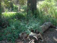 A log in a shady area makes a great bench. BUT, put it on a couple of rocks or it will rot off. An example of a natural garden. - grid24_6