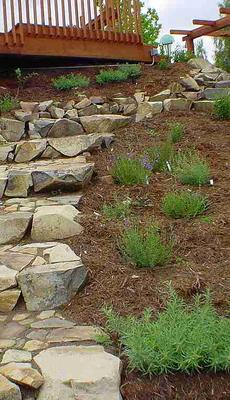 A native plant  garden with rock steps. Your Southern California Garden can look like a  formal park, and you can be Yogi, you do not have to be bare. - grid24_6