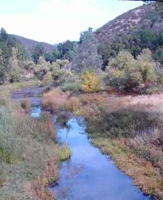 The Salinas River at Las Pilitas Rd. The riparian area is all within the photo. - grid24_6