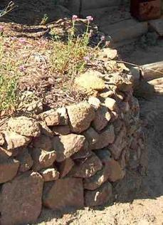 A rock wall with Monardella antonia. Rock walls do not have to be hard to build, if you have some rocks. - grid24_6