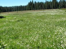 A Sierra meadow at 7500 feet. - grid24_6